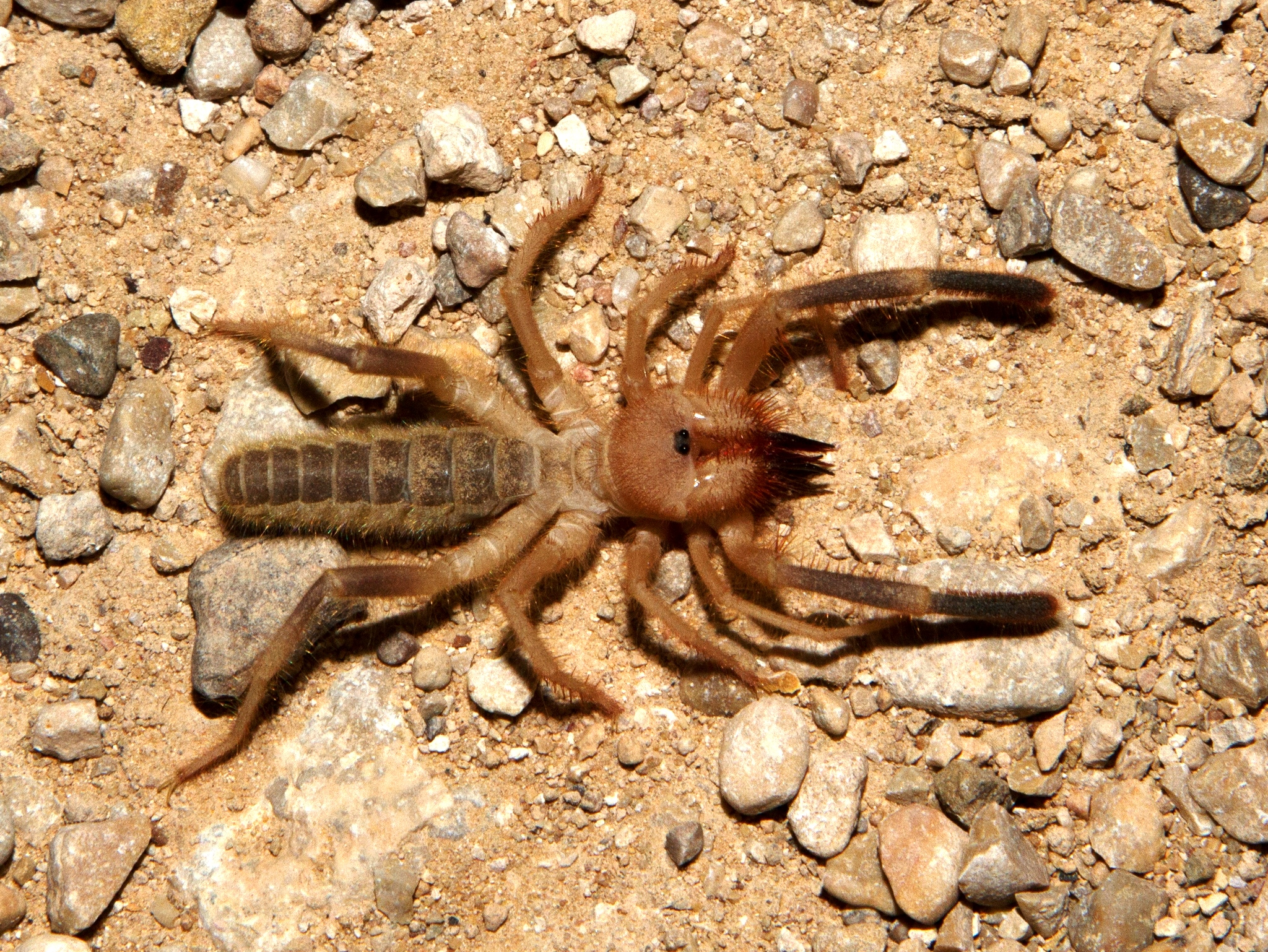 Tooth cave spider pictures Massive 'prehistoric mega shark tooth found in Italy